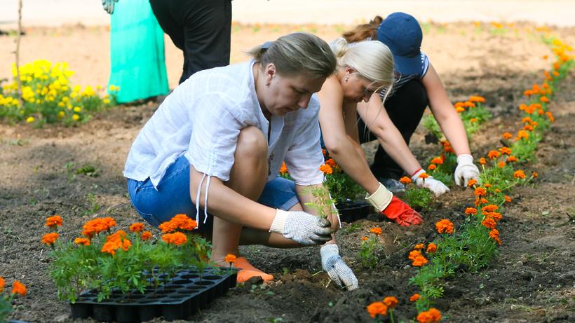 Как мы сажали цветы в городе 34