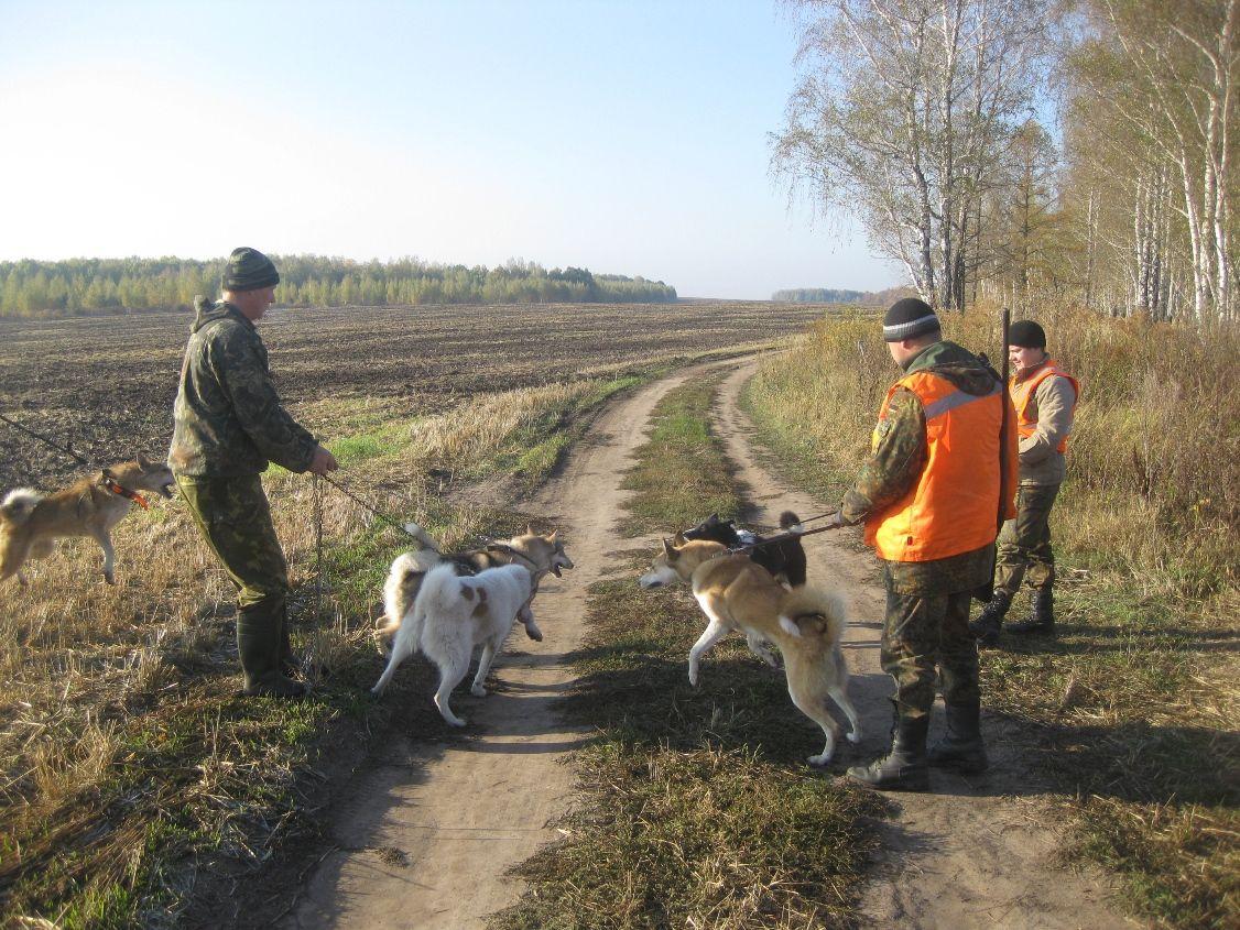 В Орловской области установлены сроки охоты на 2021 год